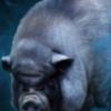 Mr. Porc
